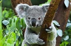 Australia – Австралия